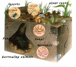 Soil is teeming with microbes, fungi and other life!