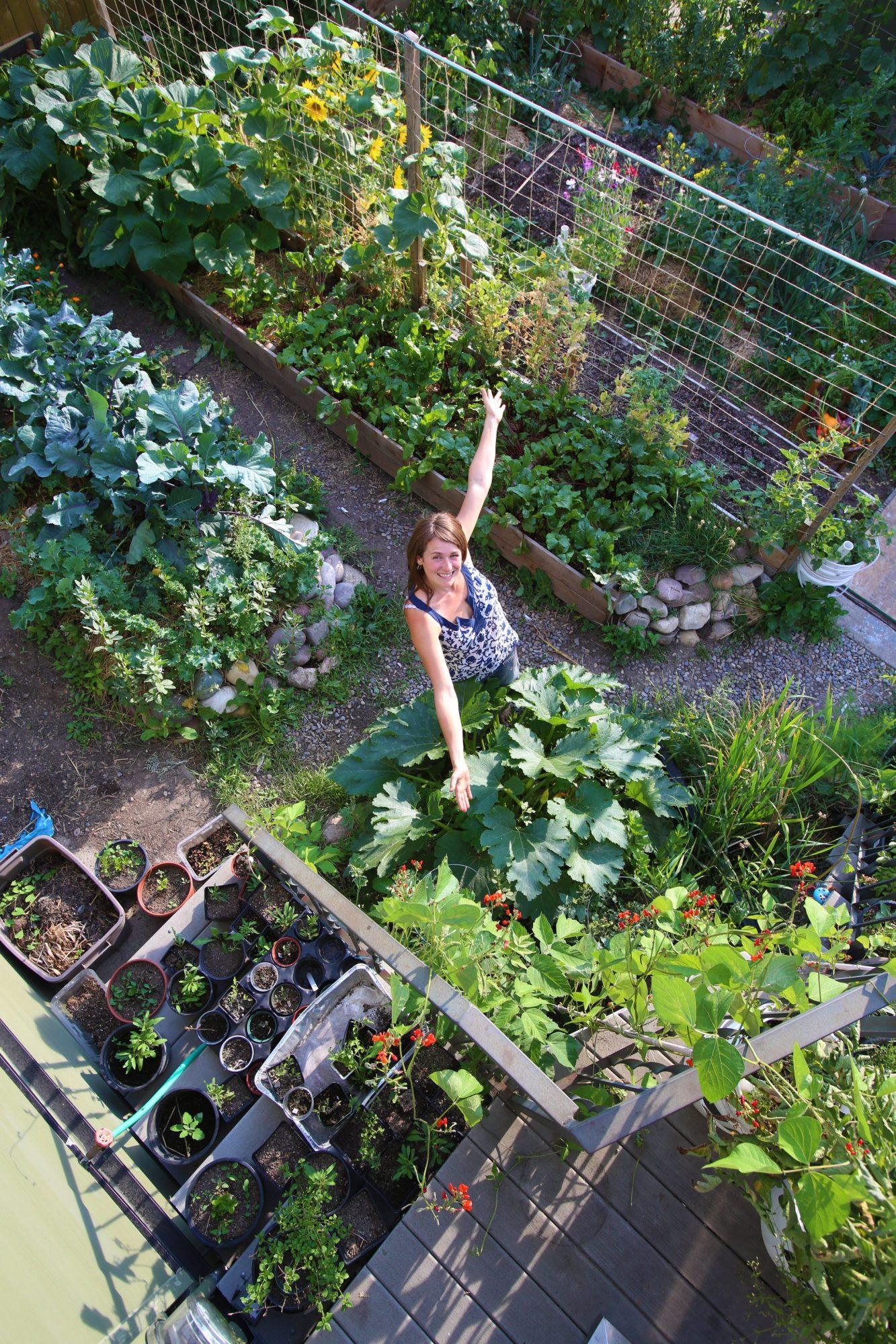 Vegetable Garden (After)