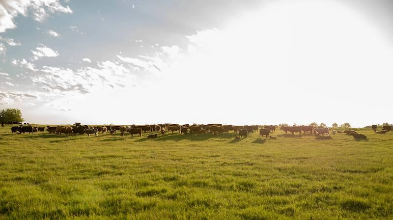 redtail-farm