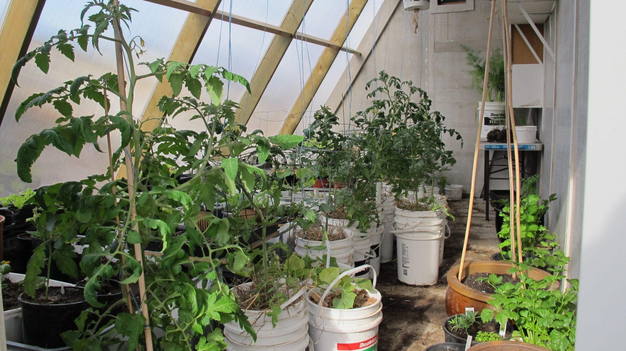 Inside our passive solar greenhouse