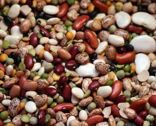 bean-varieties