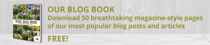 blog book banner