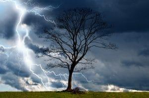 tree-and-storm